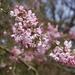 Blossom by bizziebeeme
