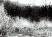 10th Apr 2016 - marshland