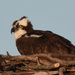 Sitting on the nest by mccarth1