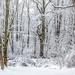 Winter Wonderland Deux
