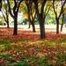 Autumn carpet by cruiser