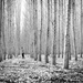 Into the Woods by pflaume