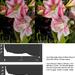 feedback & histograms