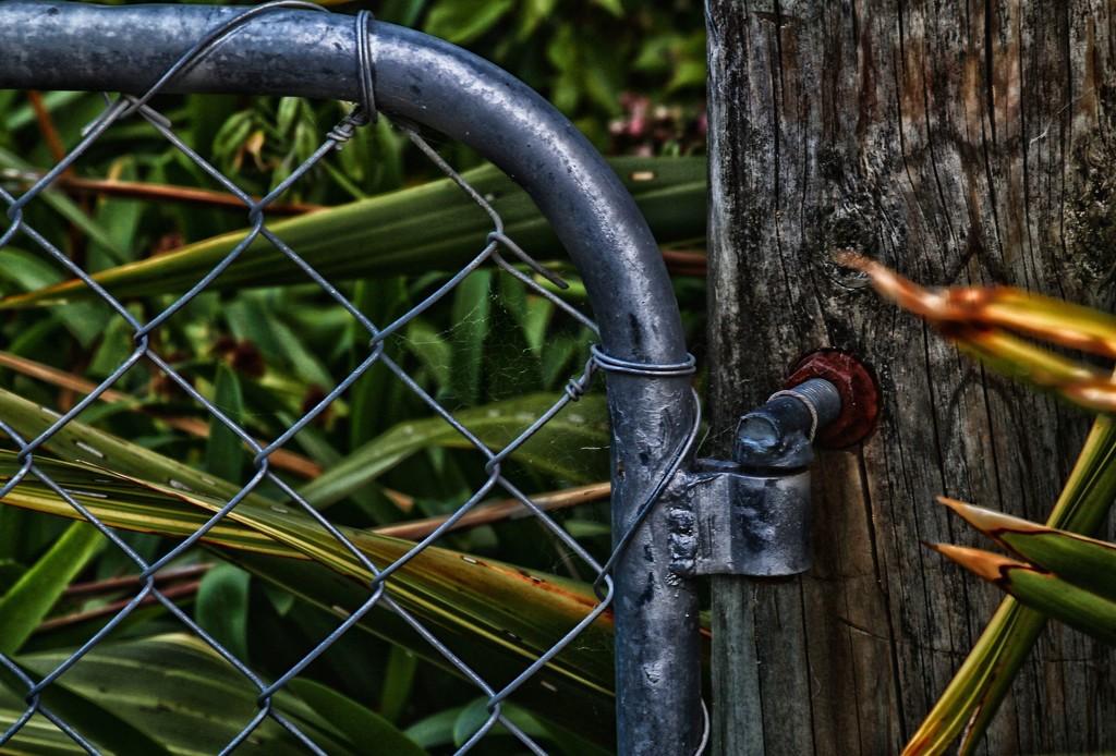 Rural gates by kiwinanna
