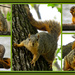 One Curious Squirrel by milaniet