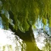 reflected willow by helenhall