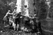 20th Apr 2016 - Tree huggers