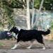 Skye on the Run