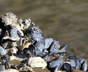 20th Apr 2016 - Oysters and mussels