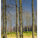 Tree trunks by ivan