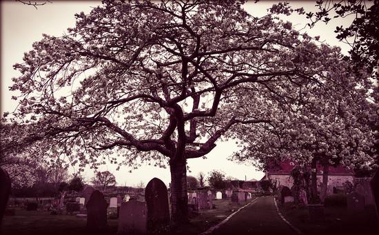 Graveyard Blossom by iowsara