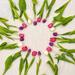 Tulip Circle by loweygrace