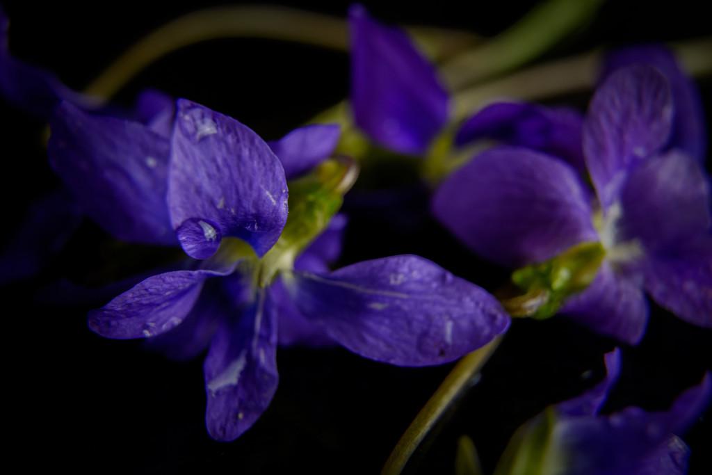 purple rain by jackies365