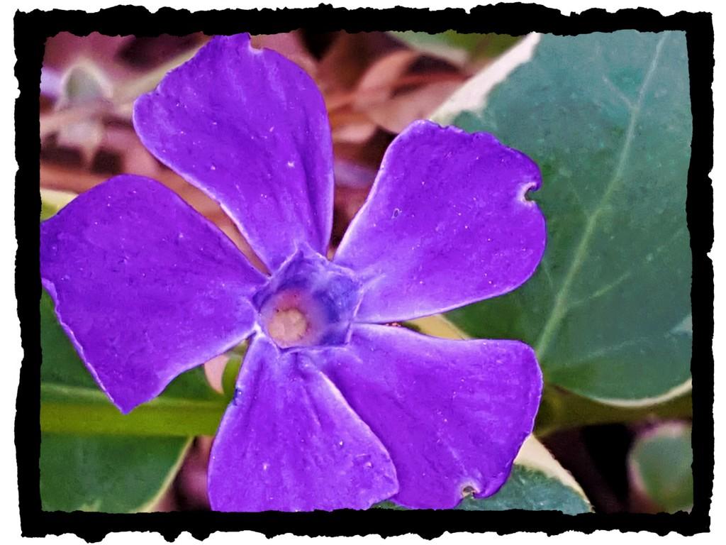Something Purple  by jo38