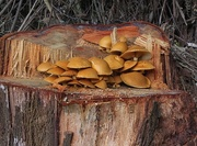 23rd Apr 2016 - Forest fungi