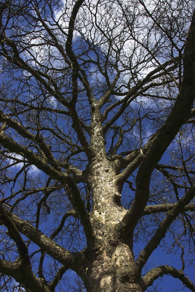 A tree of some sort! by shepherdman