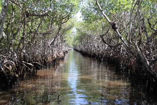 Everglades by Scrivna