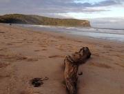 24th Apr 2016 - ANZAC weekend by the beach