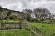 17th Apr 2016 - Rural landscape, Chilmark