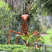 Praying Mantis, Harry P. Leu Gardens