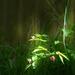 evening wildflower by teiko
