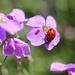 Lovely Ladybird by jamibann