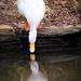 The vanity of ducks by swillinbillyflynn