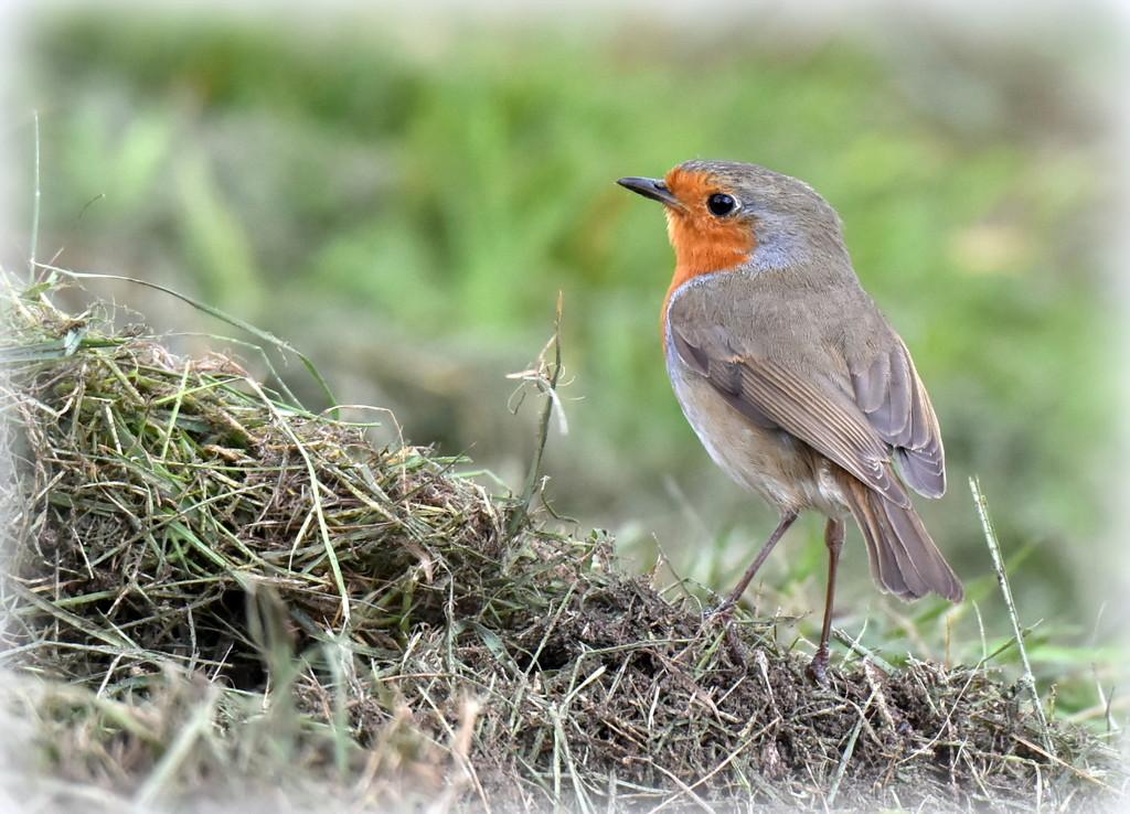 One of my favourite little birds by rosiekind