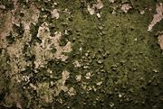 26th Apr 2016 - Like Lichen
