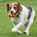 Fetch by dridsdale