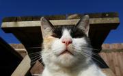 28th Apr 2016 - Happy Cat