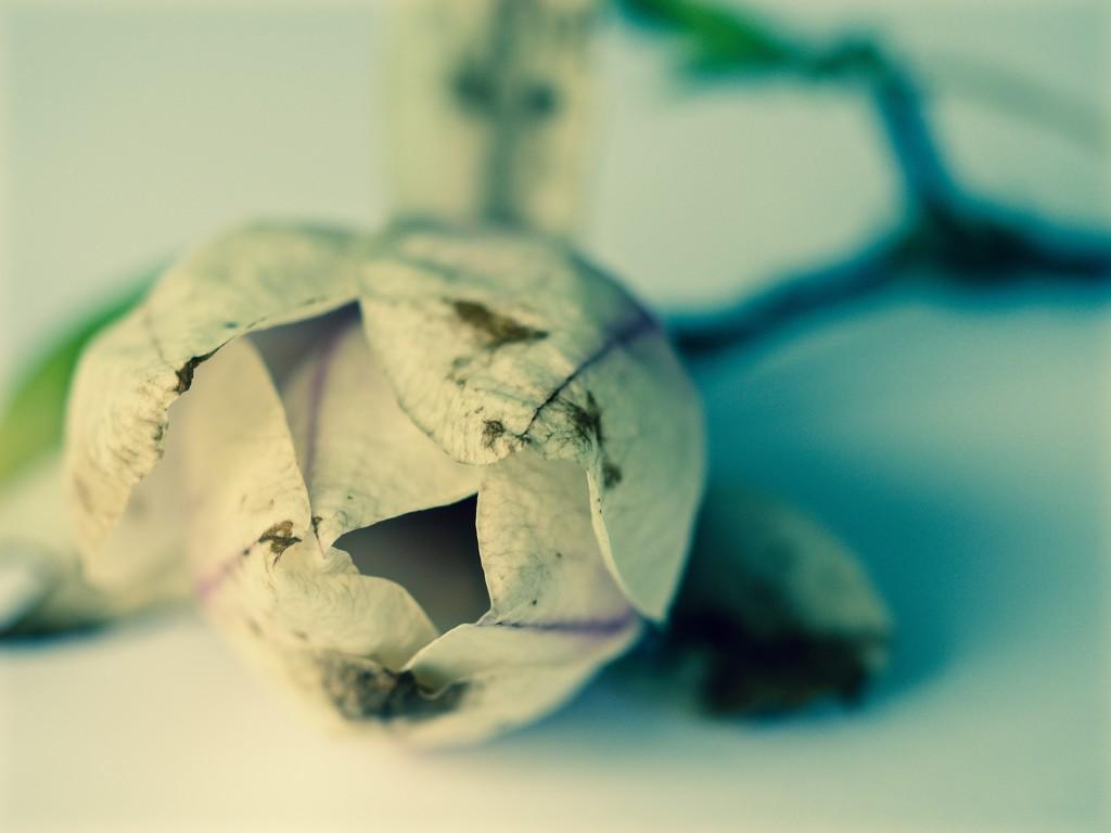 Eggshell by pistache