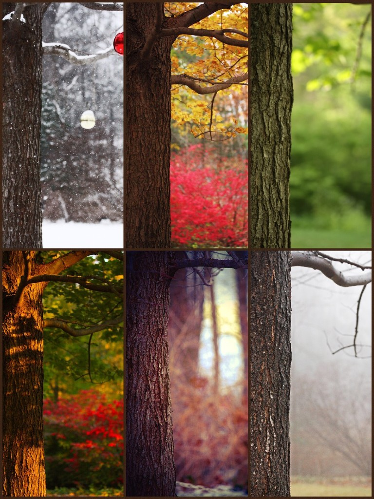 Moods of a Maple  by mzzhope