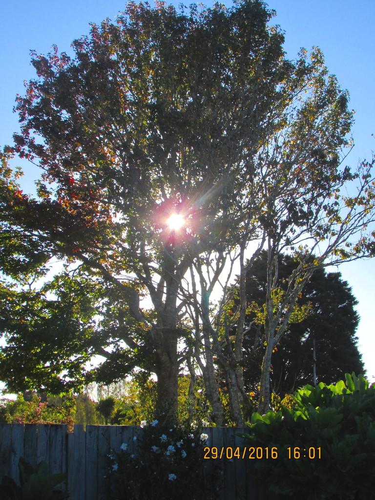 Glinting sun by Dawn