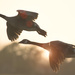 Fly like the Wind!