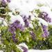 Springtime in Colorado by fntngrma