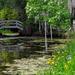 Bridge and irises, Magnolia Gardens, Charleston, SC by congaree