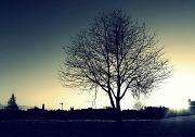 5th Dec 2010 - Sunday Tree and Sky #1