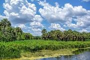 1st May 2016 - Natural Florida