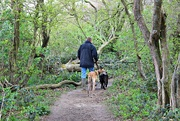 2nd May 2016 - A Walk in the Woods.