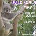 wild koala day by koalagardens