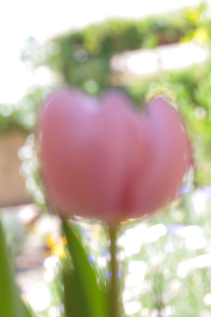 crazy bokeh tulip by blueberry1222