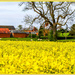 Rape Field And Beyond