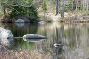 3rd May 2016 - Frog Pond II