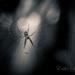 Venom by shylaine3304