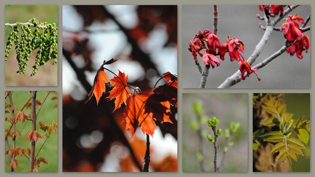 Trees - Rebirth by genealogygenie
