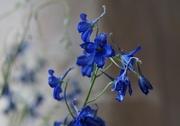 4th May 2016 - blue