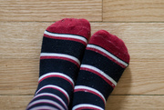 4th May 2016 - Pookie's socks 04