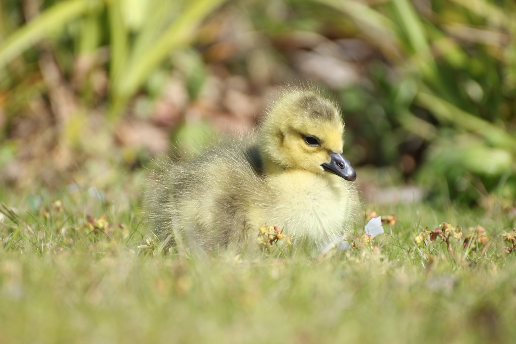 Such a cutie! by bizziebeeme