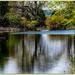 Camellia Lake, Woburn Abbey Gardens